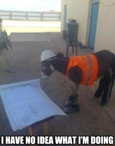 Donkey construction worker