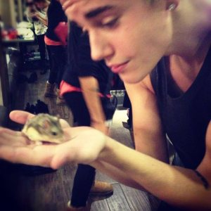 Yes, an actual hamster.